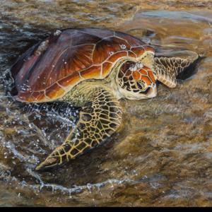 Turtle on Low Tide