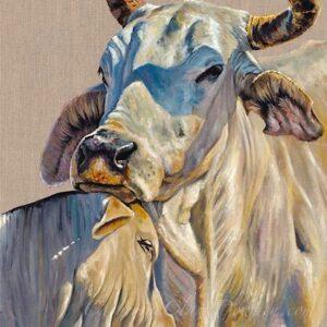 brahman,cow,calf,embrace