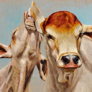 brahman,calves,cattle