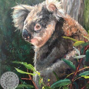 koala, in a tree, Australian koala