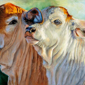 Brahman,calves,painting,cattle,outback,